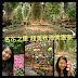 名古屋景點 - 名花之里 秋海棠溫室  Begonia Garden