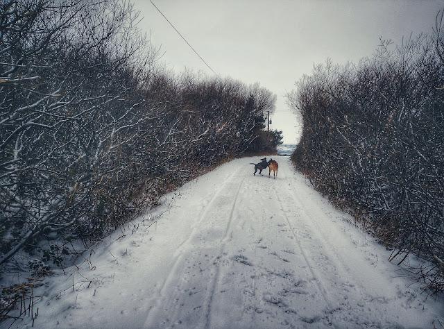 snowy landscape Connemara, Ireland