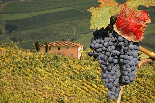 Vinícolas na região de Chianti na Toscana