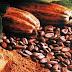 Wisnu Wardhana Ungkapkan Harga Referensi CPO Turun, Tapi Biji Kakao naik