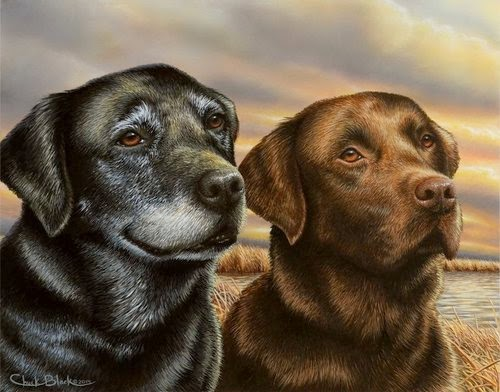 04-Charles-Black-Hyper-Realistic-Pencil-Drawings-of-Dogs-www-designstack-co