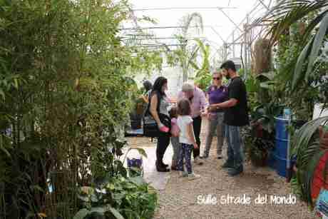 Casa Farfalle interno serra