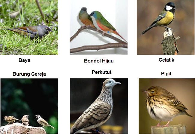Hama Burung