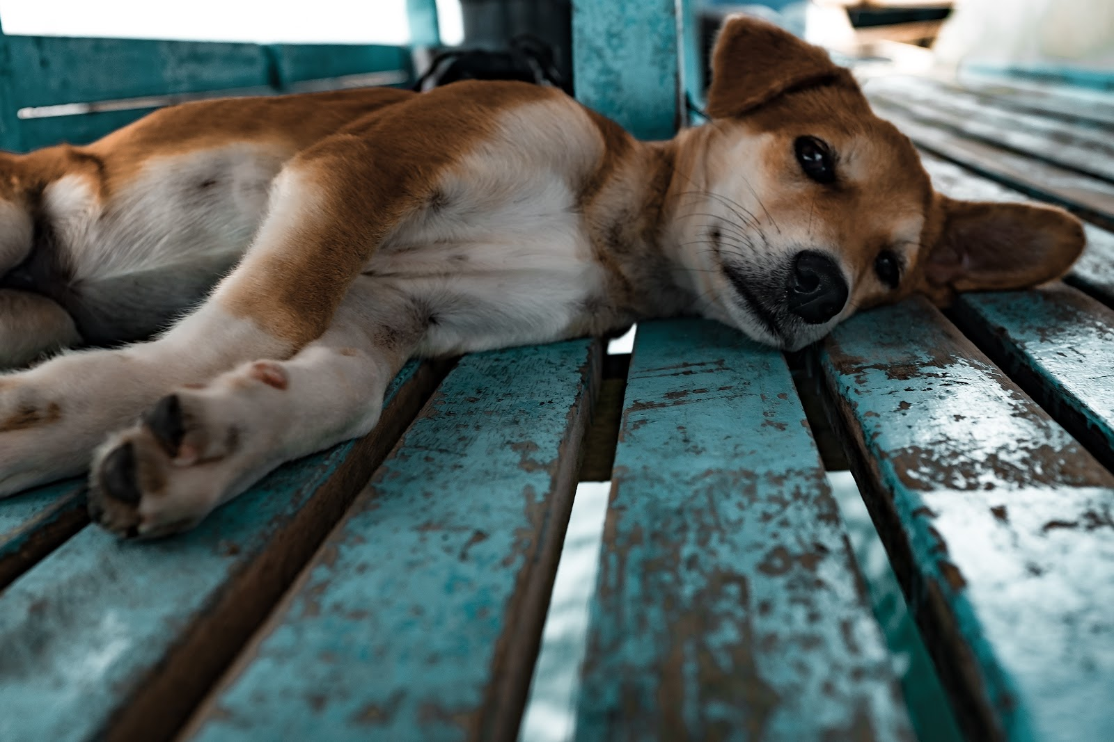 , Travel:  Who Will Look After the Dog While You're Away?