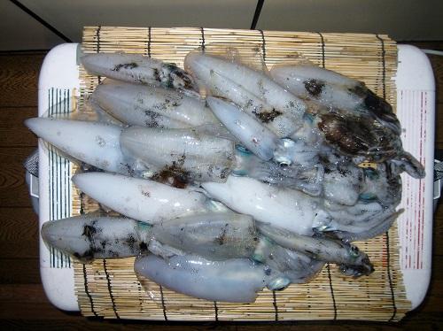 関西の船釣りで釣れる 竿とリール 瀬戸内海 アオリイカ