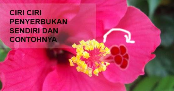 3 Ciri Ciri Penyerbukan Sendiri Dan Contoh Bunga Yang Mengalaminya