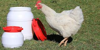 Futtertonnen für Hühner