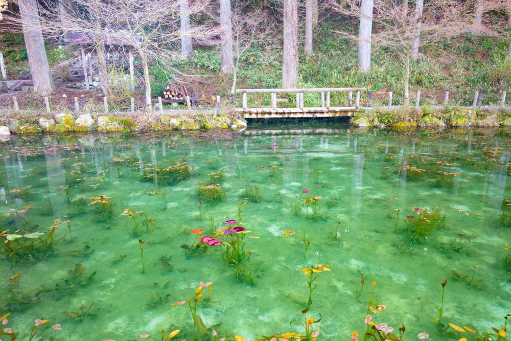 Monet's Pond