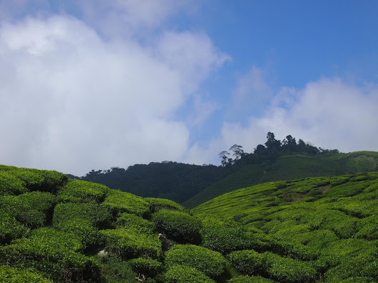 The Soothing Cameron Highland, Malaysia