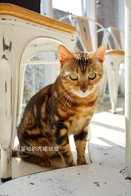 16797037 1232020293517880 5025921561849095967 o - 西式料理|貓爪子咖啡 Cat's Claw  Brunch & Cafe'