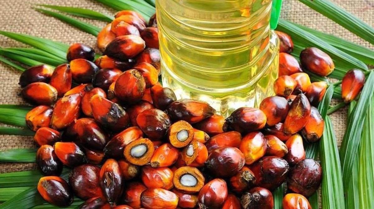 Una de las polémicas más fuertes desatadas en el campo de la alimentación  en los últimos años ha sido la del aceite de palma. Es el más usado del  mundo y se ... aa0b3519bf7