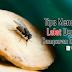 Tips Mencegah Lalat Dengan 3 Campuran Bahan Ini