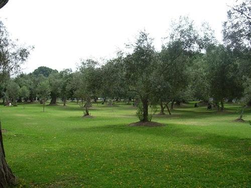 Parque El Olivar (San Isidro)