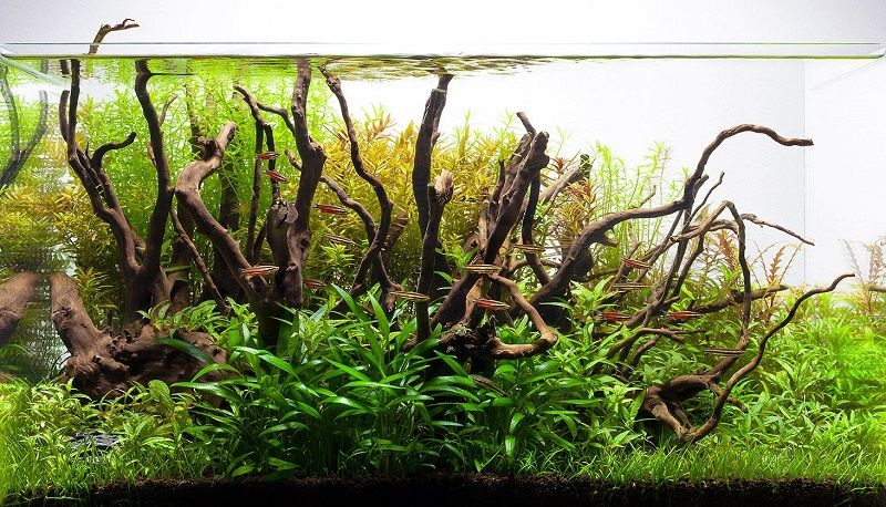 driftwood untuk aquarium ikan hias
