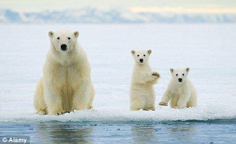 q 版 北極熊