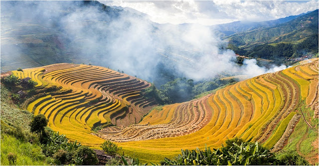 Now is the best time to see terraced rice fields in Mu Cang Chai, Vietnam 1