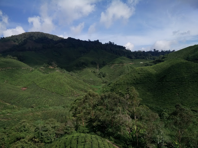 BOH Sungai Palas Tea Centre Cameron Highlands