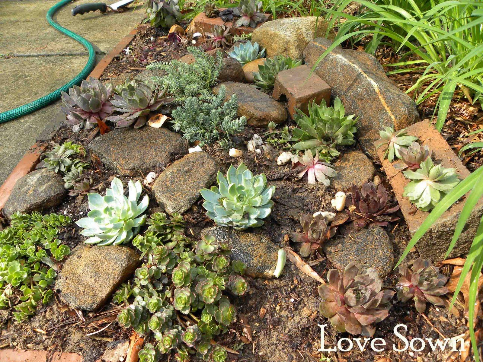 Revamp: Succulent Garden Spot (Part 2) - Love Sown