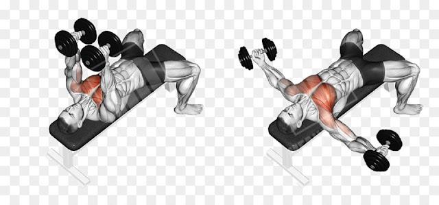 Exercice du biceps