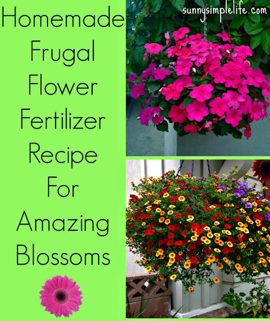 homemade organic flower fertilizer