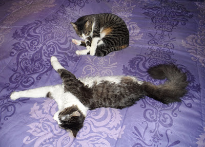 Anakin Two Legged Cat & Trixie Napping