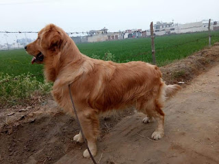 puppies for sale in ahmedabad