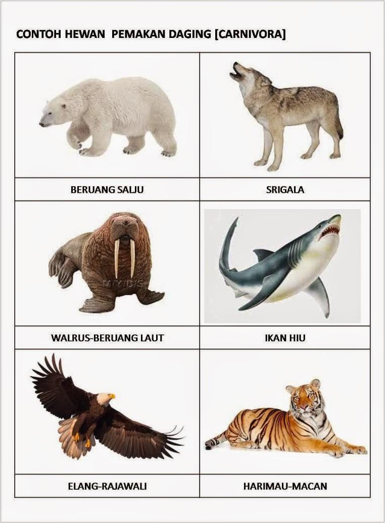Hewan Pemakan Hewan Lain Disebut : hewan, pemakan, disebut, Kumpulan, Gambar, Kartun, Hewan, Pemakan, Daging, Himpun