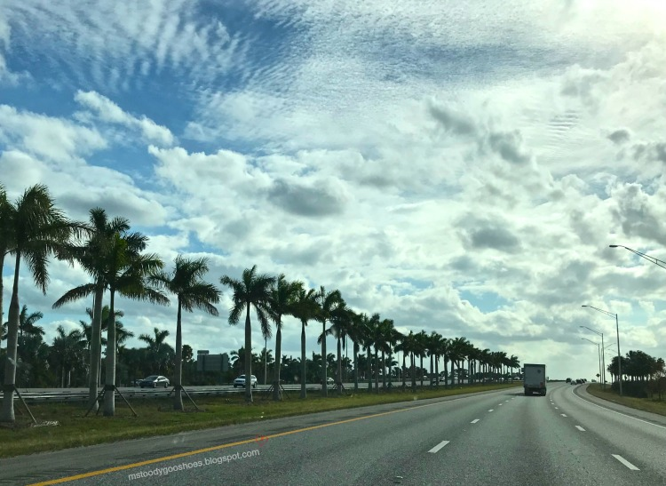 February Photo Diary: A Month In Florida |Ms. Toody Goo Shoes