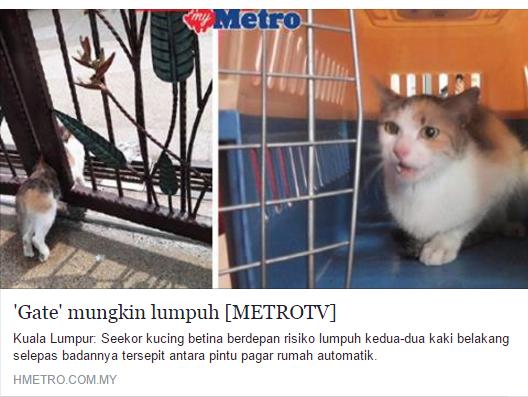 kucing tersepit pintu autogate, kucing gate, kucing tersepit, kucing lumpuh, autogate, pencinta kucing, kucing, kelab kucing ku sayang