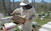 Μέθοδος Μπέκα: Πρόληψη σμηνουργίας και δημιουργία νέων μελισσιών