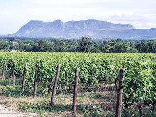 Cape Town, Constantia, Etelä-Afrikka, Franschhoek, Kapkaupunki, Paarl, South Africa, Stellenbosch, viinintuotanto, wine, wine valley
