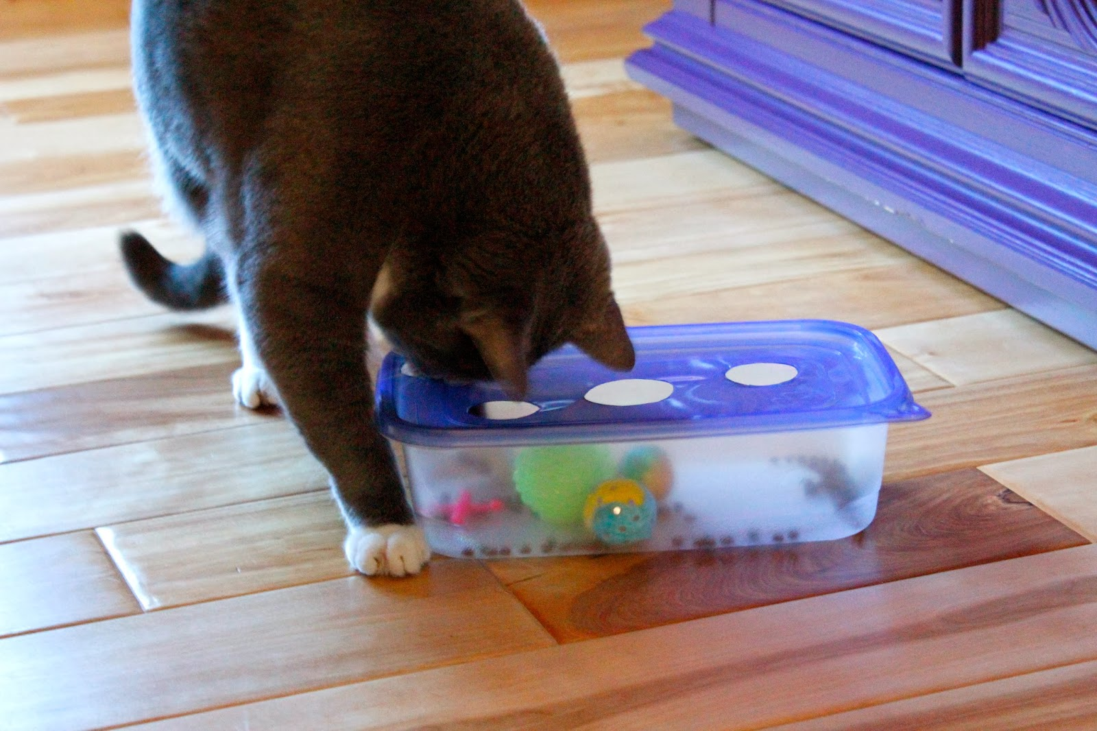 The Glam Cat Diy Cat Puzzle Tutorial