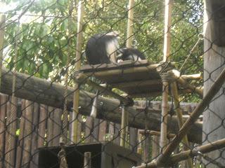 Monkeys Climbing at Animal Kingdom
