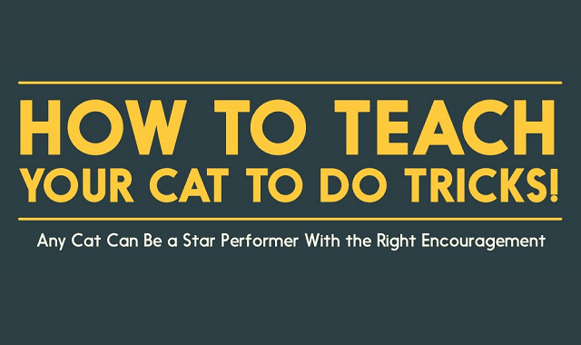 How to Teach Your Cat to do Tricks