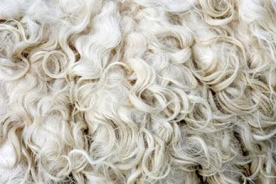 - Si la llana se encongíx cuan se bañe... ¿Per qué les ovelles no se fan mes minudes cuan plou?
