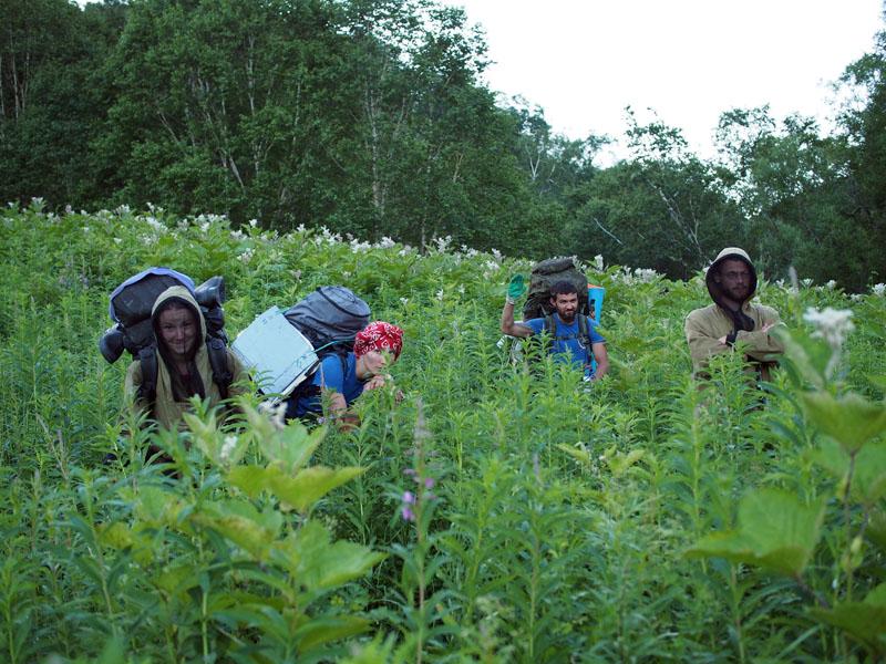 Трава на Кетачане Камчатка