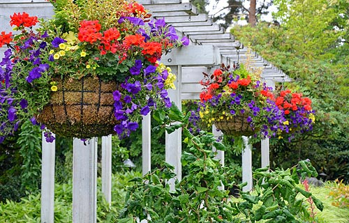 flowers hanging from pergola