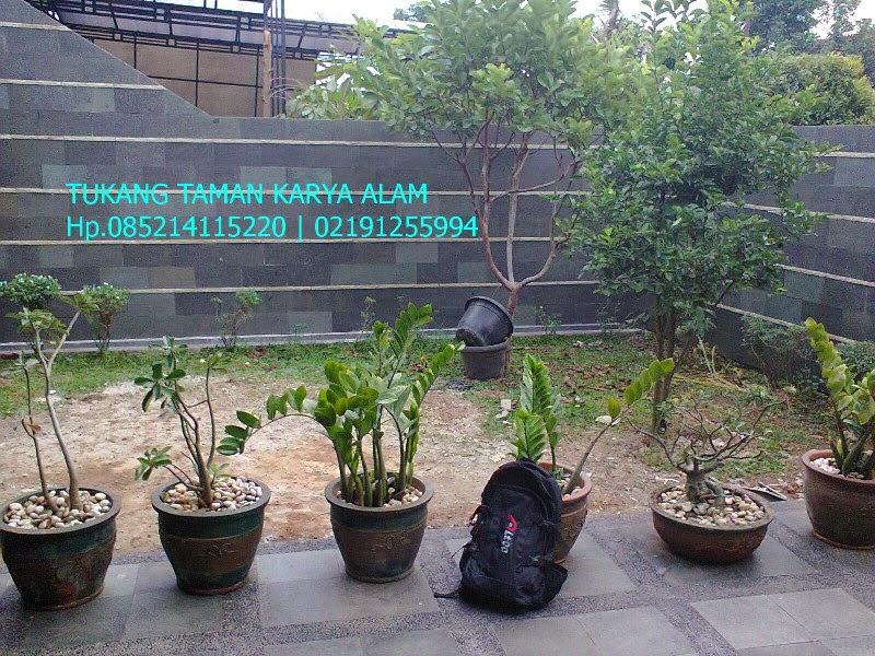 http://tukangtamankaryaalam.blogspot.com/2015/01/spesialis-tukang-taman.html