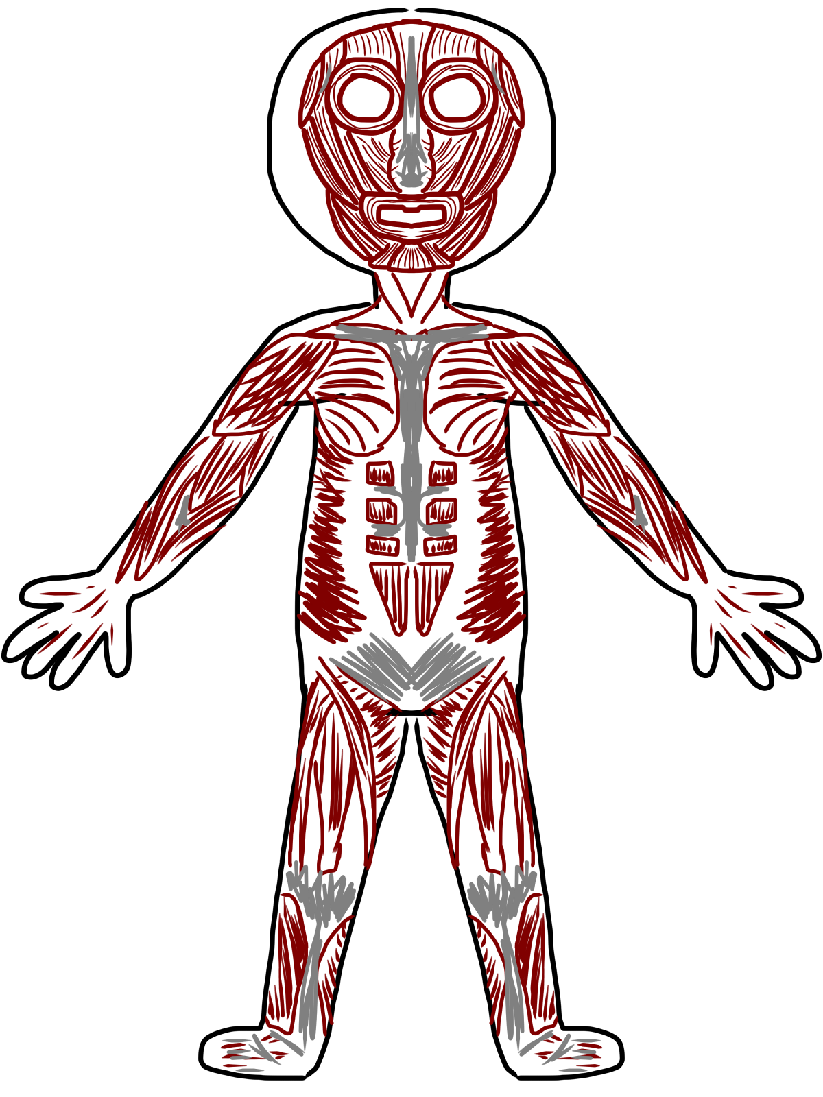 SchoolBox Treasures: Body System Fun!