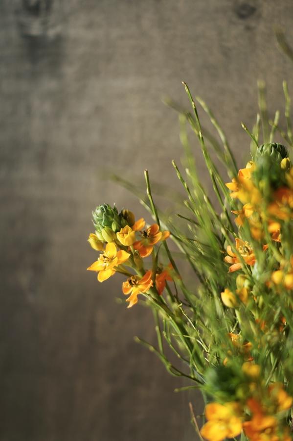 Blog + Fotografie by it's me! - Wohnen - orangefarbener Milchstern vor roh verputzter Wand