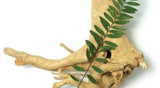 Eurycoma longifolia um viagra natural