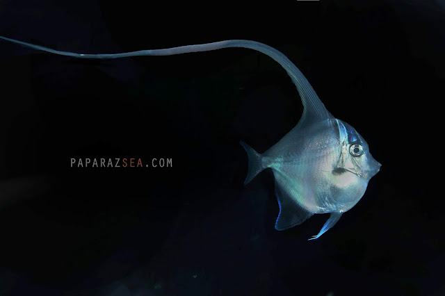 Scuba diving, underwater photography, paparazsea