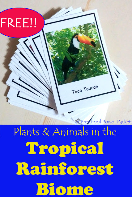 FREE Animals Of The Amazon Rain Forest Printables - Homeschool Giveaways