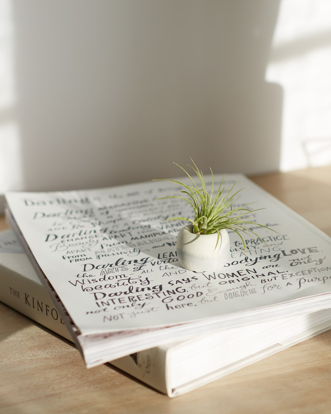Easy Low Maintenance House Plants air plant tillandsia review hellolindasau darling magazine