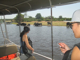 travel to Chobe national park