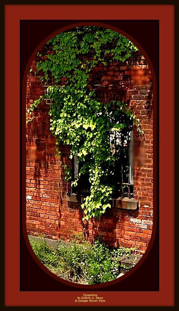 Boston Ivy vine overgrowing brick facade of old building in Troy NY