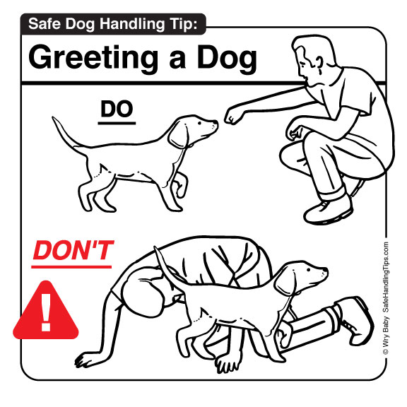 Safe Dog Handling Tip - Greeting a Dog