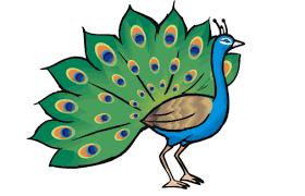 भारत का राष्ट्रीय पक्षी(National Bird of India)