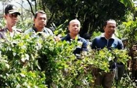 BNN Kabupaten Bogor Temukan Ladang Katinon