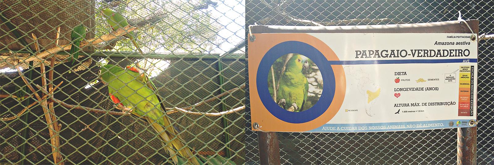papagaio verde gaiola